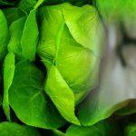 Waspadai Alergi Makanan Dibalik Kelezatan Kuliner Pada Lanjut Usia